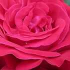 rose drops by Enri-Art