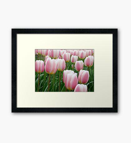 Tulips 15 Framed Print