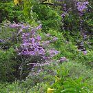 Wild Flowers - Flores Silvestres by Bernhard Matejka