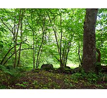 The Beauty of Early Summer Greens Photographic Print