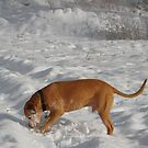 silly snow covered dog by Amanda Huggins