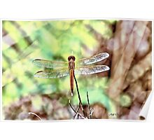 DragonFly  (HDR) Poster