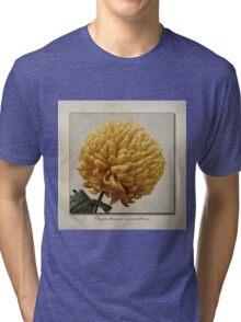Chrysanthemum grandiflorum Yellow Tri-blend T-Shirt