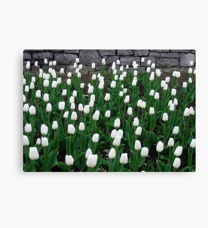 Tulips 10 Canvas Print