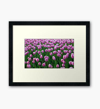 Tulips 14 Framed Print