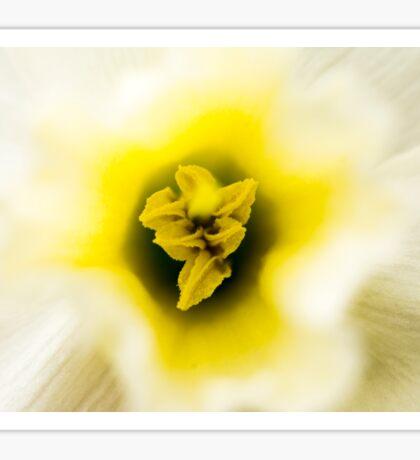 Daffodil I Sticker