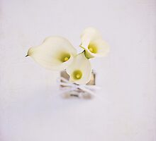 Miniature Calla Lilies by photecstasy