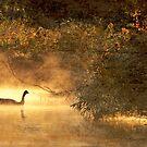 Golden Goose by reindeer