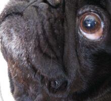 Good things black pug Sticker