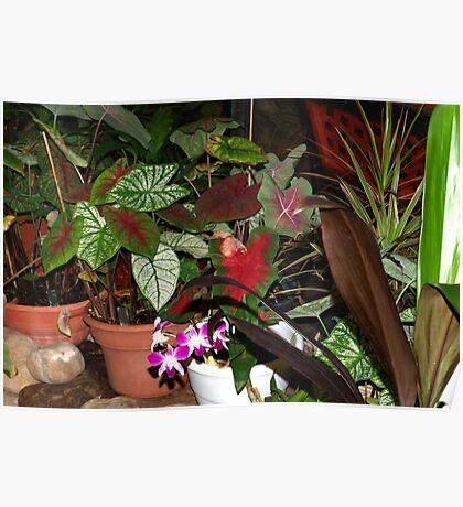 Pretty plants Poster