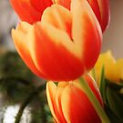 Beauty of Tulips by MichelleRees