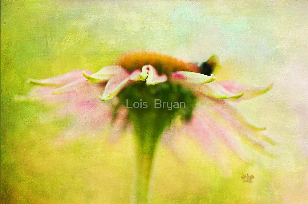 In Perfect Harmony by Lois  Bryan