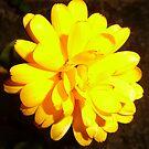 Yellow by Fara