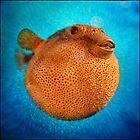 Pufferfish by Irene2005