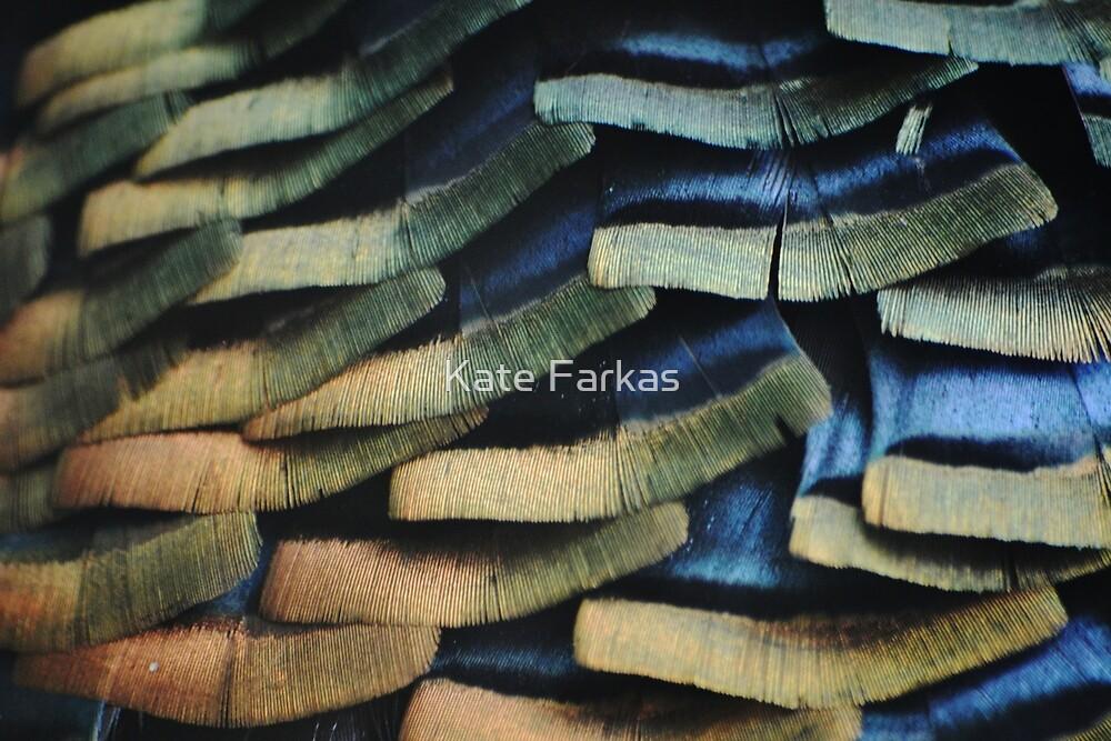 Wild turkey feathers by Kate Farkas