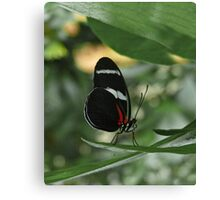 Antiochus Longwing. Canvas Print
