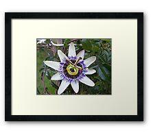 Flower of Passion Framed Print
