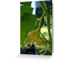 A little pickle Greeting Card