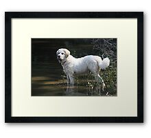 Intense Goliath Framed Print