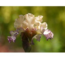 Within and beyond a dream is iris   Photographic Print