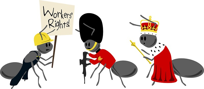 Soldier ant and queen