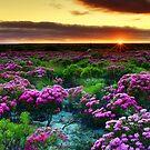 Sunrise! by Peter Doré