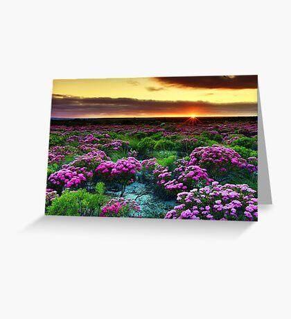 Sunrise! Greeting Card