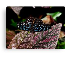 Dark Blue Tiger. Canvas Print
