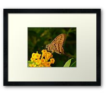 Longtail. Framed Print