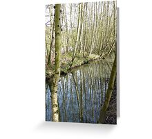 Silver birch trees by a side stream at Newmillerdam Greeting Card