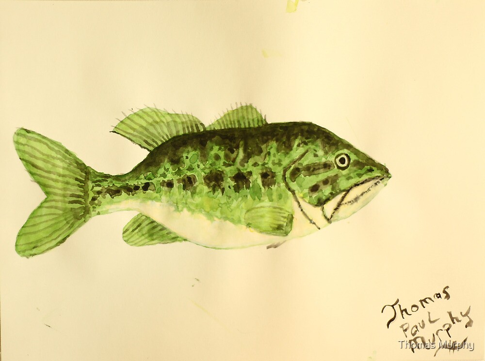 Large Mouth Bass by Thomas Murphy