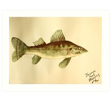 Walleye Art Print