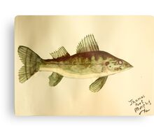 Walleye Metal Print