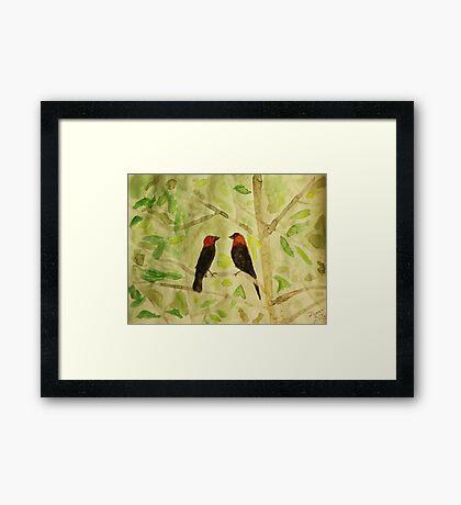 Brown Headed Cowbirds Framed Print