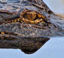 Aligator Sticker