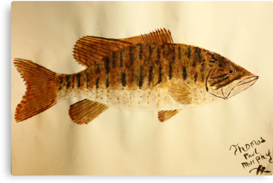 Smallmouth Bass by Thomas Murphy