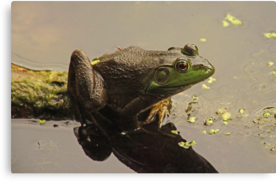 Frog 8376 by Thomas Murphy
