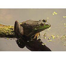 Frog 8376 Photographic Print