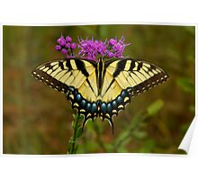 Yellow Tiger Swallowtail. Poster