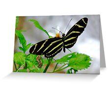 Zebra Longwing. Greeting Card