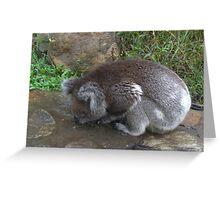 Koala having a drink Greeting Card