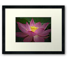 Lotus Charm Framed Print