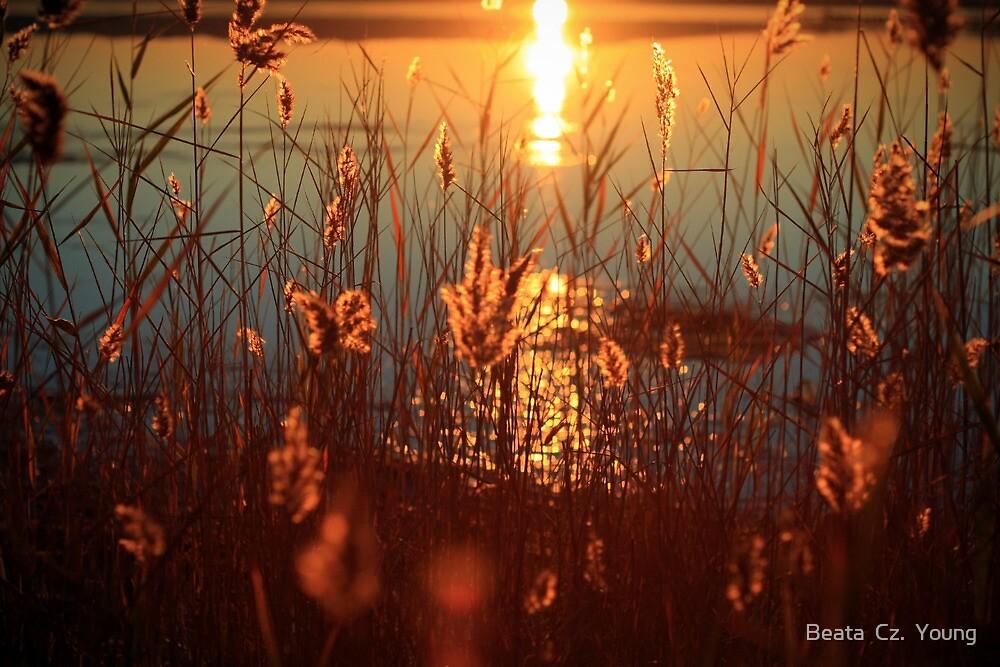 Let them shine. by Beata  Czyzowska Young