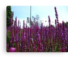 Knee deep in purples Canvas Print