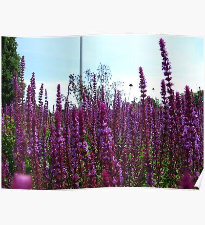 Knee deep in purples Poster