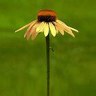 Golden Coneflower by Sharon Woerner