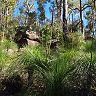 Grass tree landscape by geophotographic