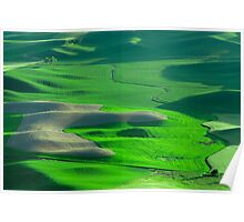 Lone Tree on the Palouse Poster
