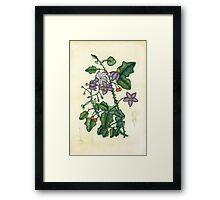 Flora4 Framed Print