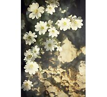 Tiny White Petals Photographic Print